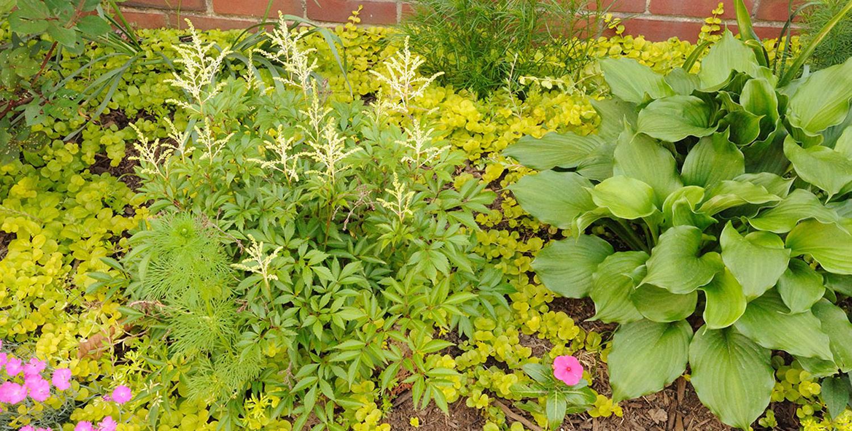 Landscape Management Irrigation in DE, PA, and MD