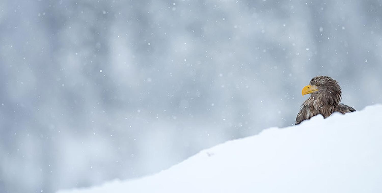 Landscape Snow Season Management in DE, PA, and MD